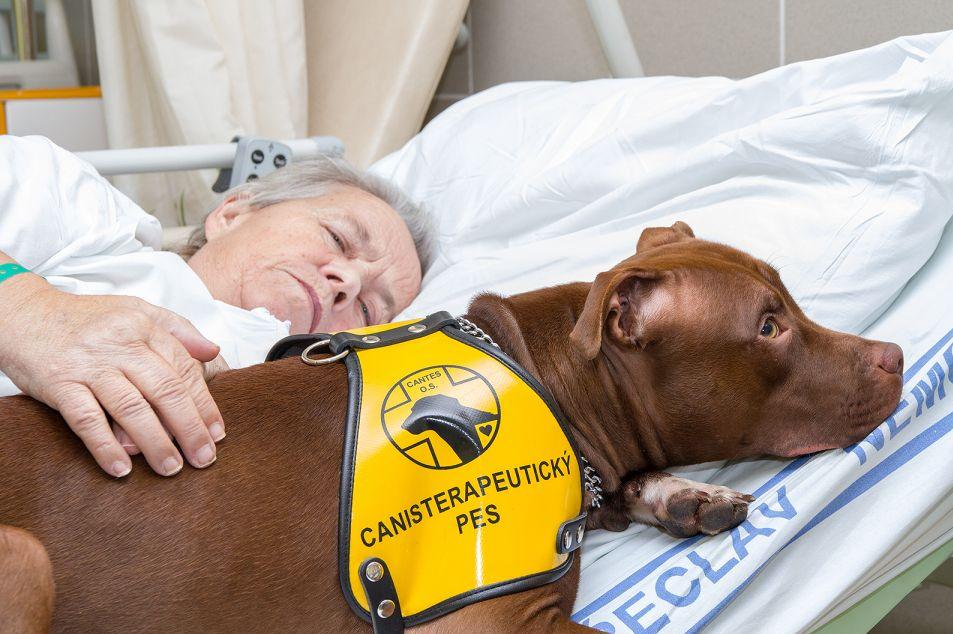 Jihlava: Pacienty opět léčí profesionálně vycvičený pes